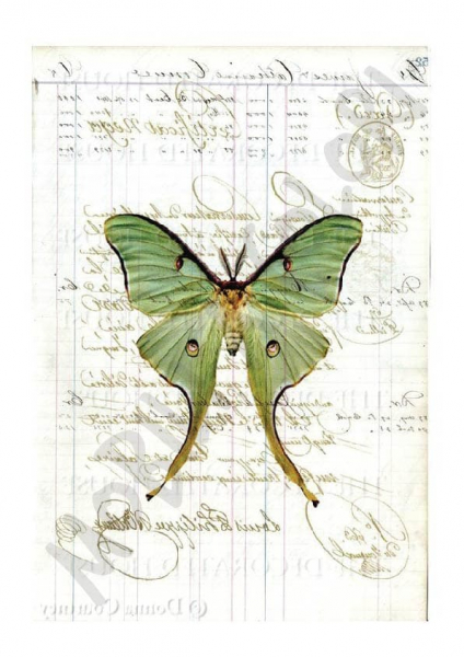 Farfalla su cartolina – Trasferimento Immagine