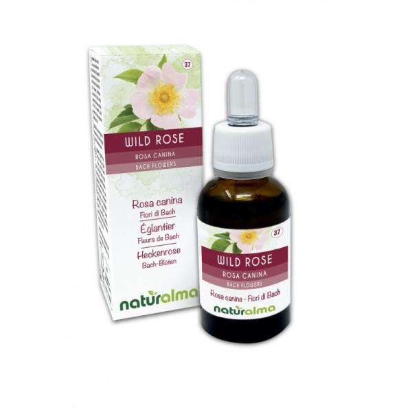 Wild Rose Fiori di Bach 30 ml liquido analcoolico – Naturalma