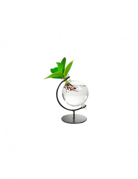 Clusia Sfera |Clusia Idro in vetro con supporto